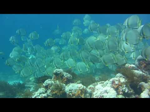 Diving in Banda sea, Forgotten Islands. Calico Jacks Dive Liveaboard Indonesia