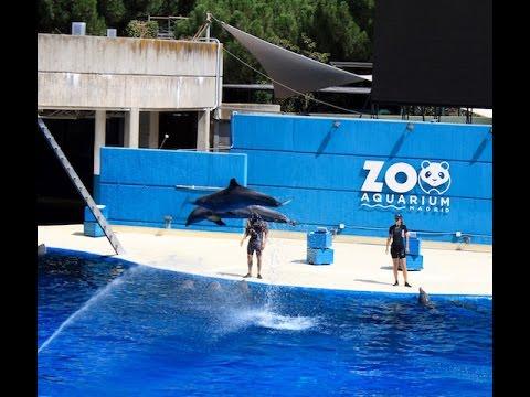 Gradina zoo Madrid spectacol de delfini...Travel blog