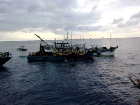 Sardine fishing off Lamitan City in Basilan, March 10, 2013