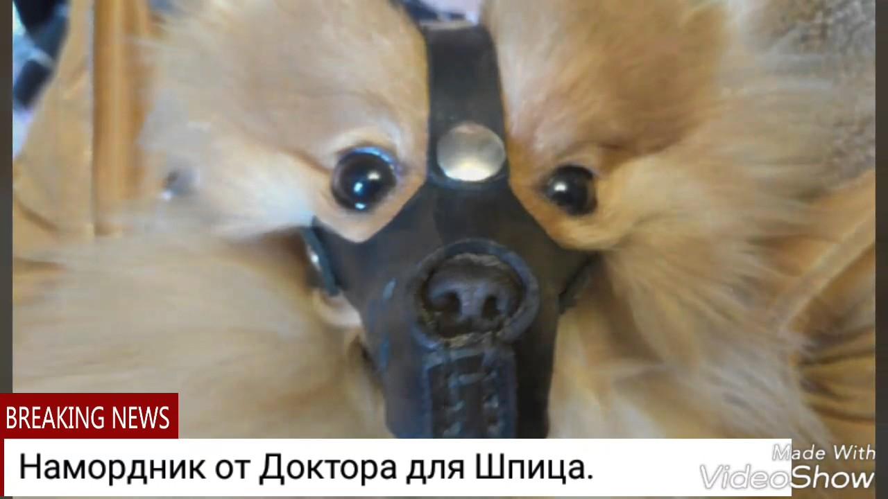 Как приучить собаку к наморднику?. Пластиковые, металлические и кожаные намордники для собак какой лучше купить, фото и отзыв.