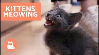 Top gatos videos