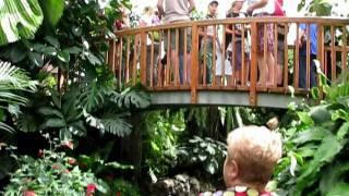 Шварцвальд Германия Видео фильм Часть 3(, 2011-07-27T18:19:43.000Z)