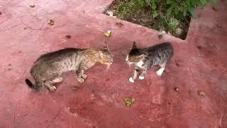 小袖ちゃん(最近子を生んだ猫さん)にビタミンをあげようとしていたら...