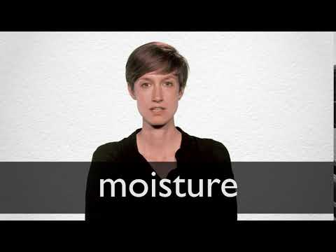 Moisture Synonyms | Collins English Thesaurus