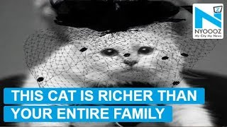 With 150 million dollars, Karl Lagerfeld's cat becomes 'world's wealthiest cat'