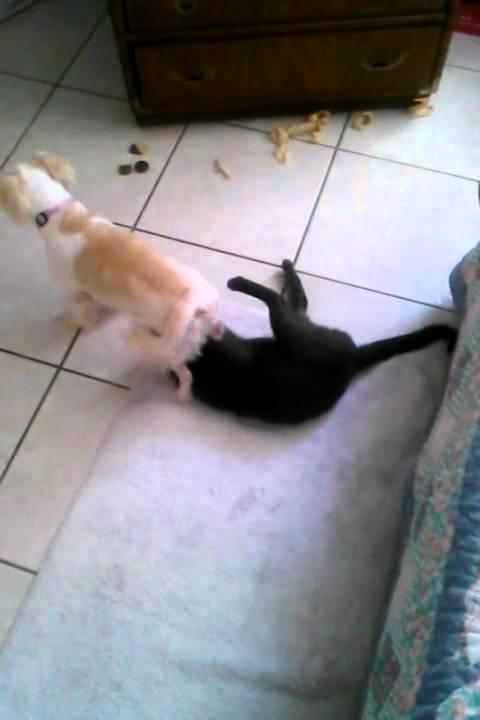 Female Dog Humping Male Cat - Youtube-2671