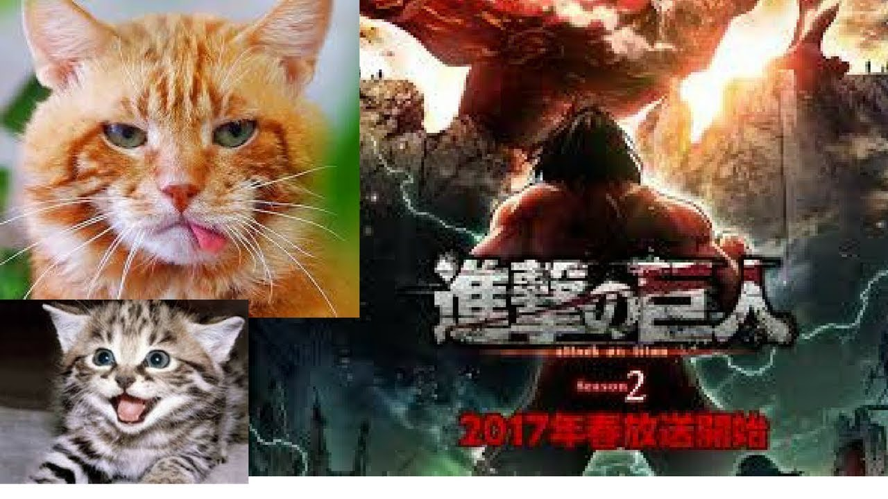 Video Kucing Lucu Anime On Titan Cover Shinzou Wo