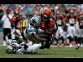 Are Carolina Panthers The Top Leader for NFC South (Panthers vs Bengals Recap)