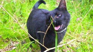黒猫と7日間かけて畑作業してみた。