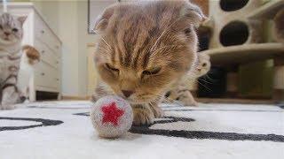 고양이 털로 고양이 장난감 만들어봤습니다. How to Make felted Cat Hair Ball toy : DIY Cat Toys 猫の毛で猫おもちゃを作った[SURI&NOEL]