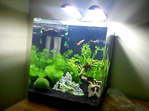 dennerle nano cube 60 liter guppy youtube. Black Bedroom Furniture Sets. Home Design Ideas