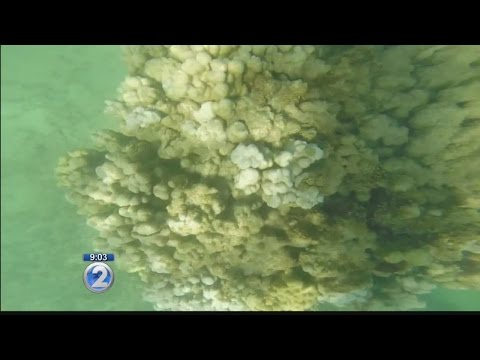 State wants to add new fishing restrictions to keep coral reefs healthy