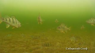 Много рыбы Рыба кишит Рыбалка с подводной съёмкой