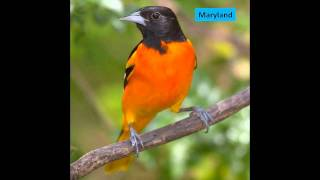 State Birds HD Picture Slideshow