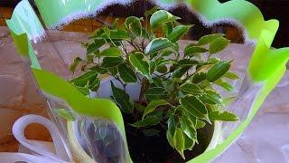 Как сделать подарок на день рождения бабушке - горшки - домашние растения(Недавно хотела поздравить с днем рождения знакомую бабушку и сделала подарок бабушке - красивый горшок..., 2015-09-01T18:36:56.000Z)