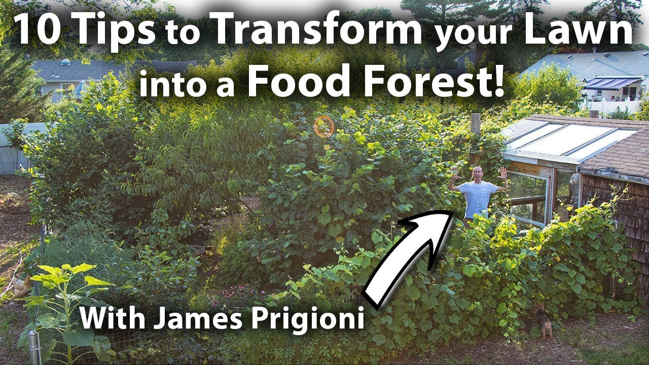 How to TRANSFORM your LAWN into a FOOD FOREST! #1