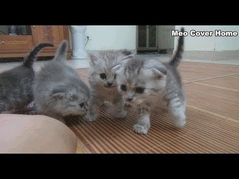 All My Cute Kittens Playing Together | Meo Cover Home !