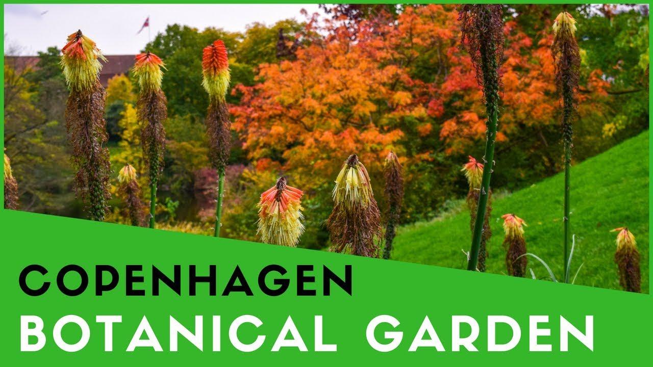 Botanical Garden Copenhagen Denmark Youtube