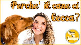 Cosa vuol dire quando i nostri cani ci leccano il viso o le mani? Q...