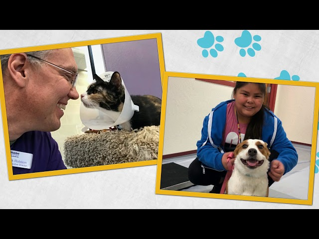 Options Veterinary Care