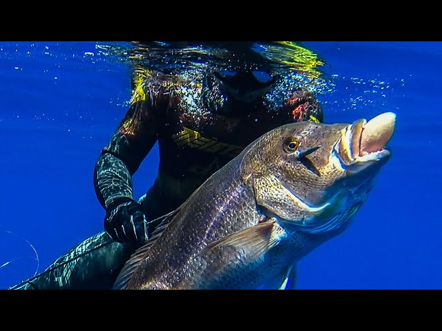 🔝SHOTS ONLY💥Spearfishing MASTERPIECE Part 1 |Spearfishing Life 🇬🇷 ✅