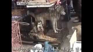 Repeat youtube video 【韓国】残酷で陰惨な犬の肉産業【閲覧注意】Cruel dog food culture of South Korea