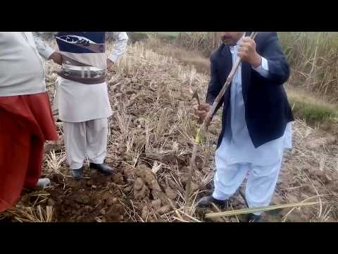 Organic agricultural in Pakistan