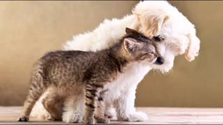 """pet Therapy Music For Dogs"" 