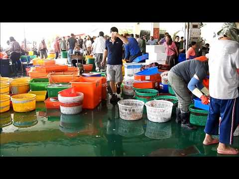 Taiwan-seafood auction -Dongshih Fishing Port- customer watch the  fish catch