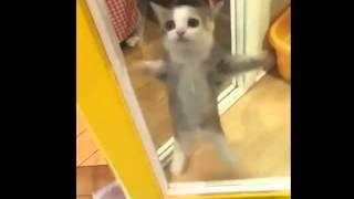 「この子猫…スーパーマリオみたいにジャンプする」(動画)