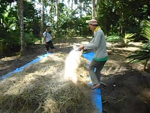 fermentasi jerami padi untuk pakan sapi & kambing dengan SOC di nisam, Aceh Utara