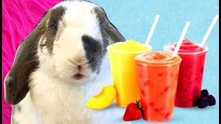 Bunny Makes A Fruit Smoothie