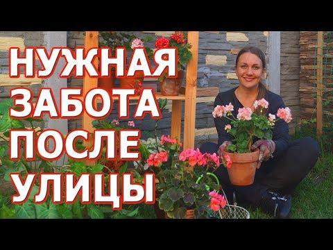 Заносим комнатные растения из сада в дом. Важно это правильно сделать! Обработка и подкормка.