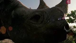 Носороги Сделано на совесть