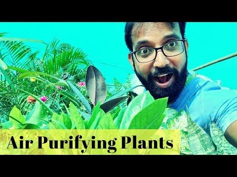 Air Purifying Plants in Delhi NCR | Noida Nursery With Price | Indoor & Outdoor Plants Delhi