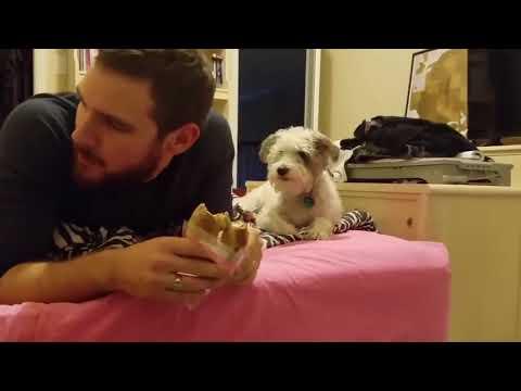 Смешные собаки Приколы про собак Funny Dogs 2017 #5 (Приколы с собаками – Неудачи Испуги)