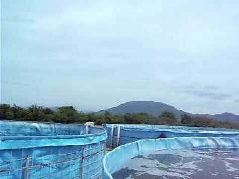 Estanques de geomembrana para la captacion de agua de l for Geomembrana para estanques de agua