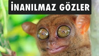 En Tuhaf Gözlere Sahip 10 Hayvan