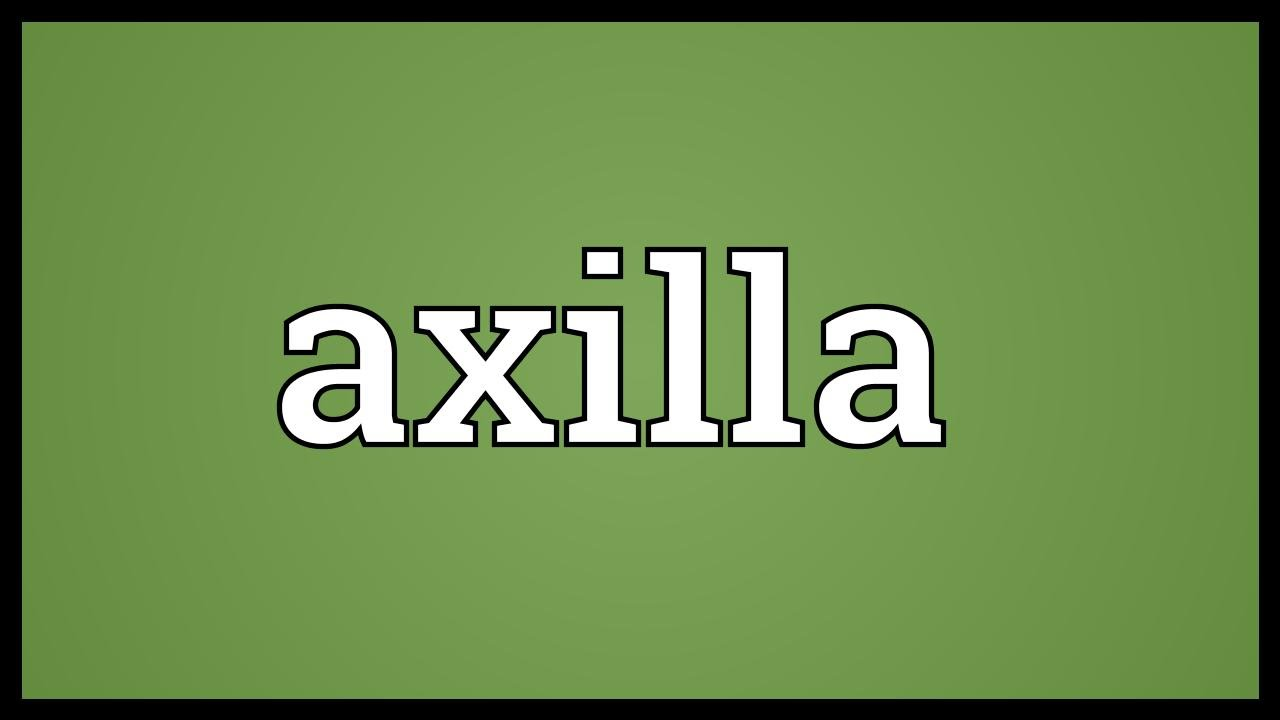 Axilla Meaning