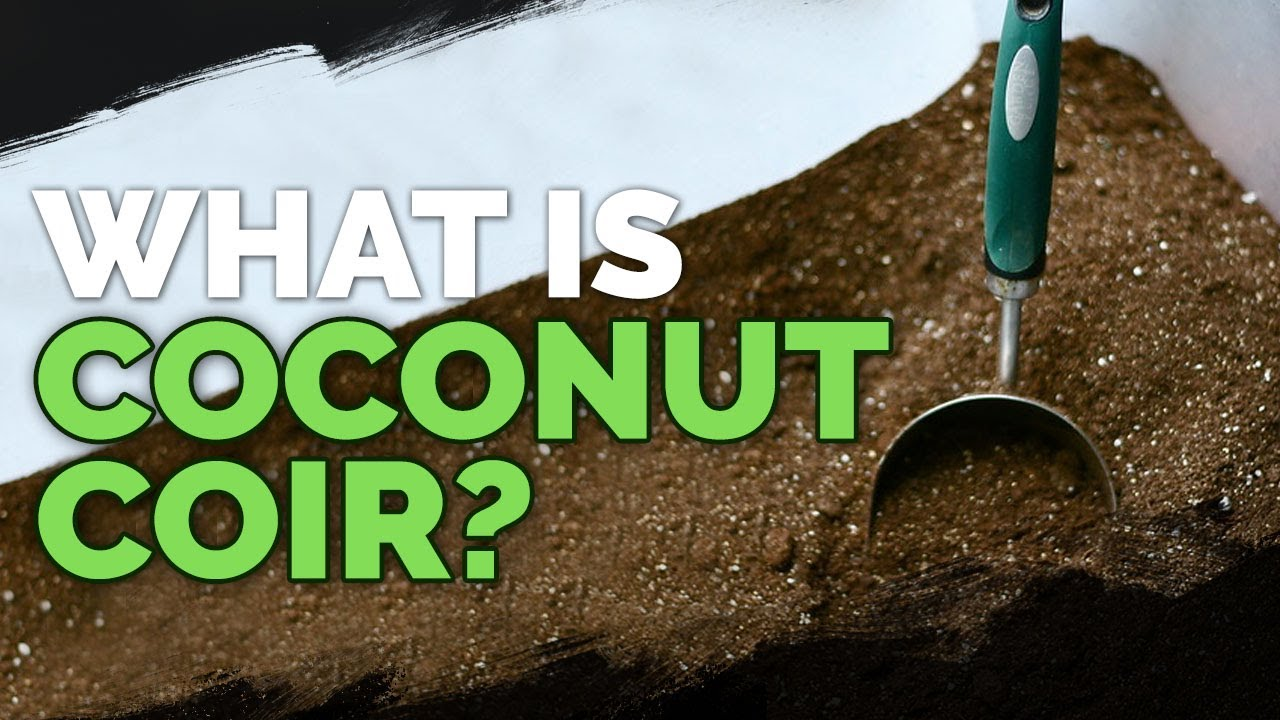 Coconut Coir: What It Is, How To Use It, And The Best Brands