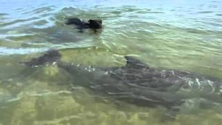 Dolphin playing with dog - Good friends