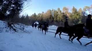 Konie - Tuchów i okolice