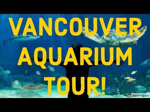 vancouver aquarium tour