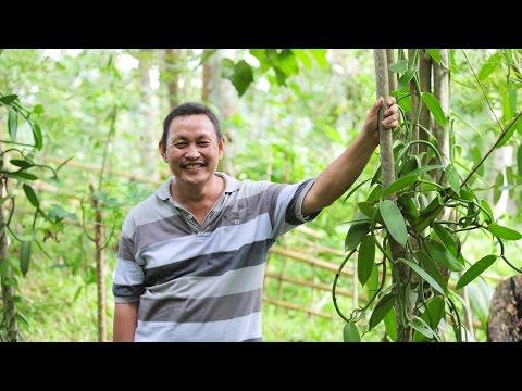 Indonesian Safari | Veganic Vanilla + Cloves