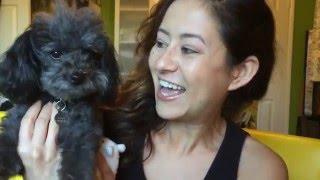 Rescue Dog Movie!