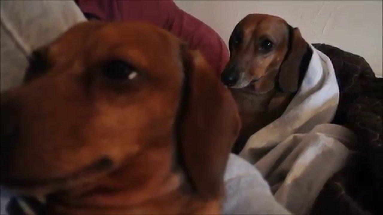 Wiener Dog Imdb