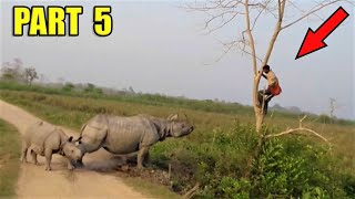 Most Incredible Wildlife Encounters On The Road, Part 5