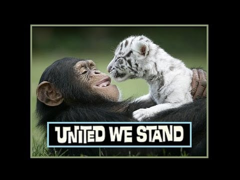 """United We Stand"" ❤ BROTHERHOOD OF MAN 🐾 1970"