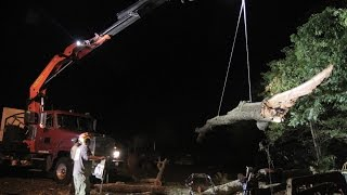 Palfinger PK40002-EH Tree Removal