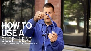 How to use a Slip Lead- with Steve from Pack Leader Dogs